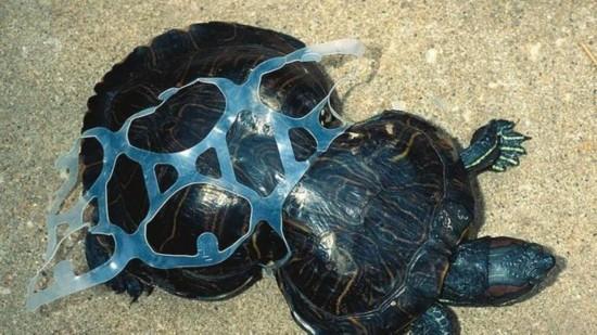海洋垃圾对海洋生物的影响