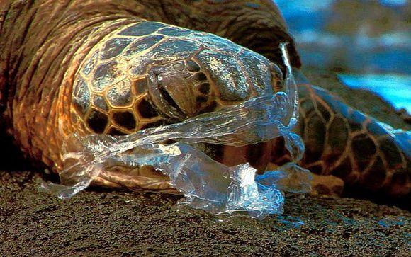 调查发现至少267种海洋生物因误食海洋垃圾或者被海洋垃圾缠住而